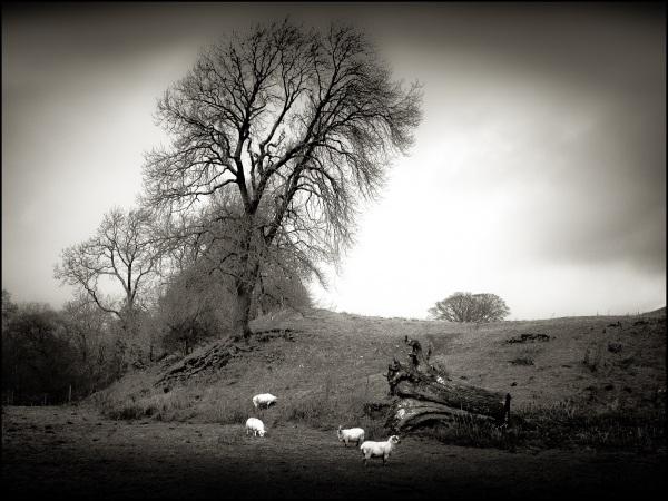 Redmire Nth Yorkshire