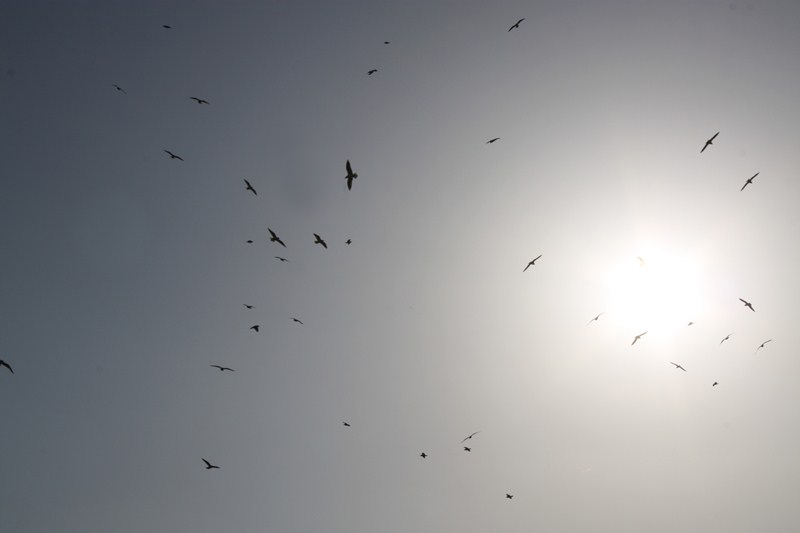 این پرنده ها...