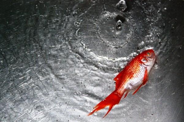 ...میم مثل ماهی