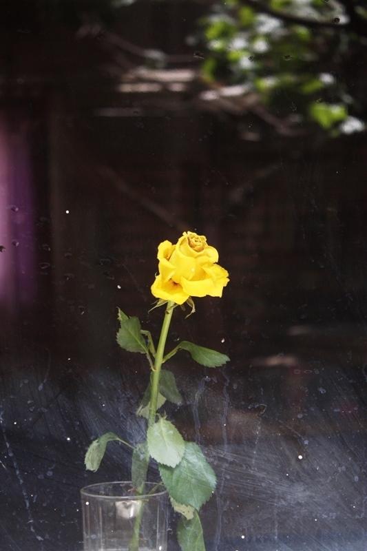 زرد مثل زن...