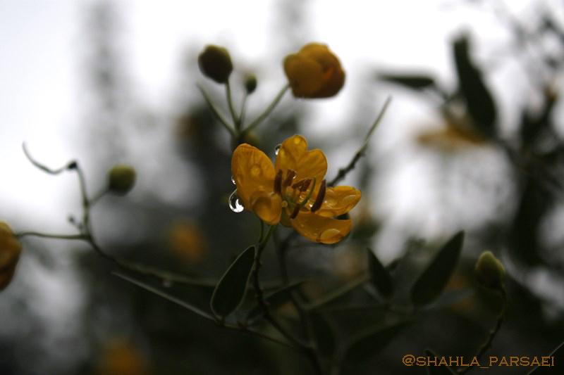 ... پس از باران