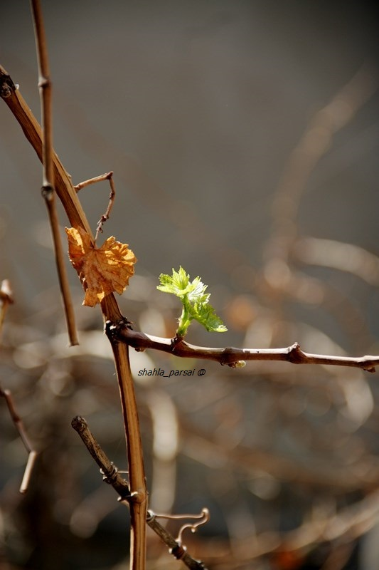 پاییز یا بهار... !؟