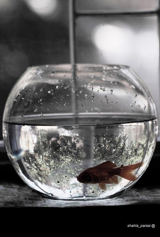 ...آب ماهی باران
