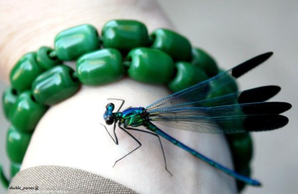سبز آبی...