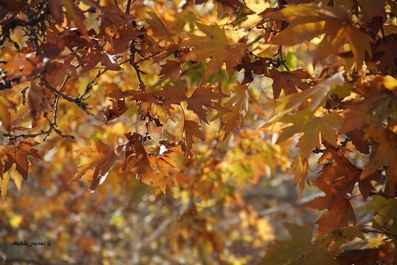 - پاییز - 2