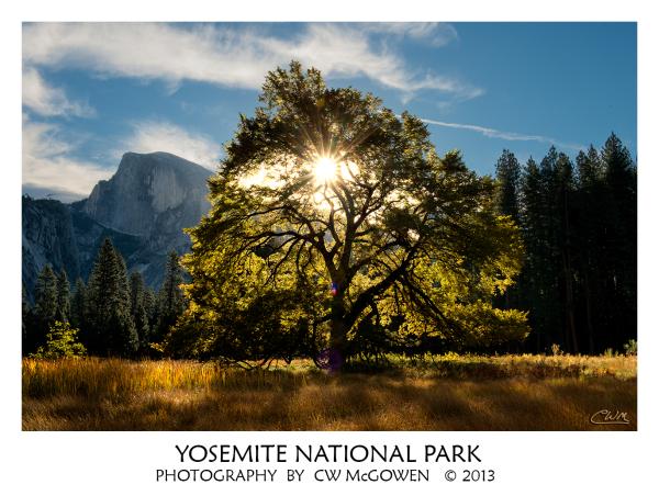 Yosemite Elm