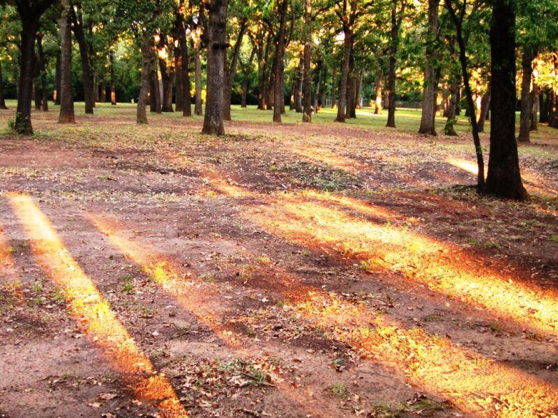 Arlington Fall