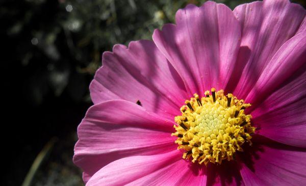 in mothers garden...