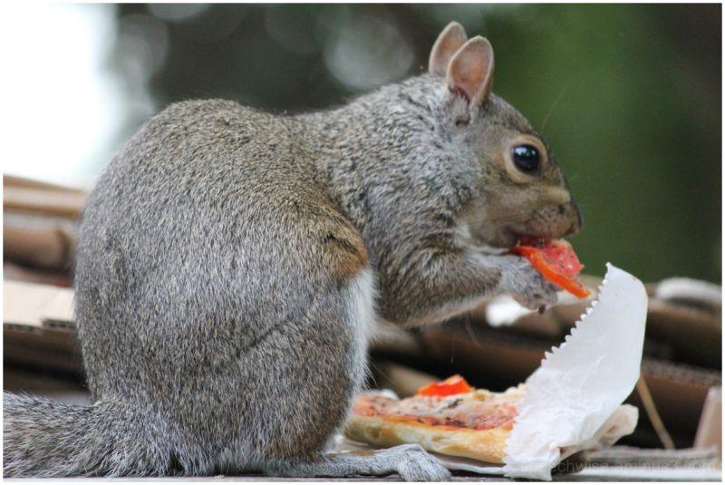 who ate the pepperoni?