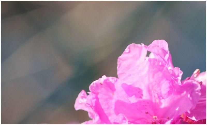 bridge of flowers 6