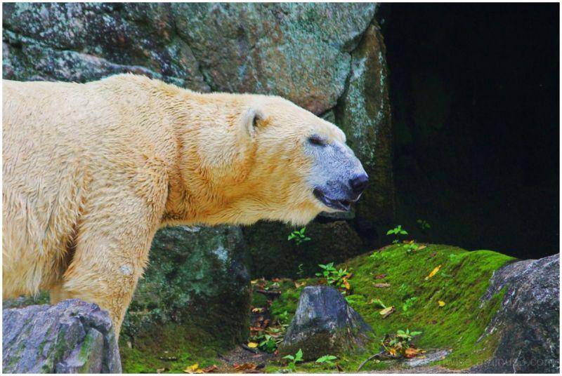 bare bear!