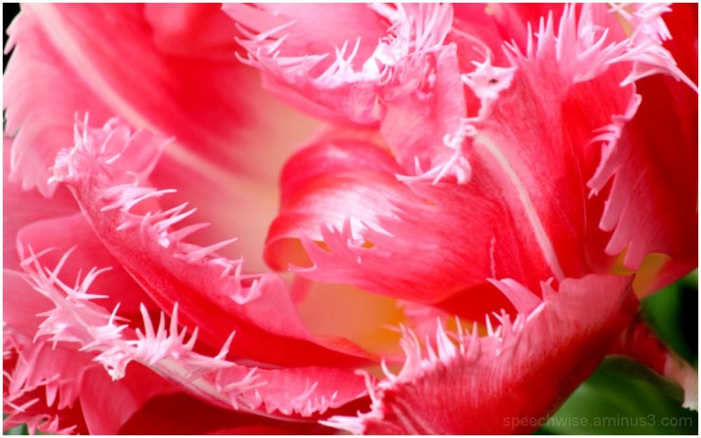 thorny yet soft