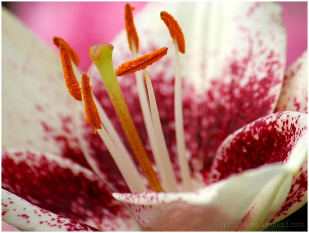 tasty pollen morsels