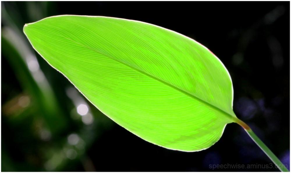 please don't leaf me, fan me!
