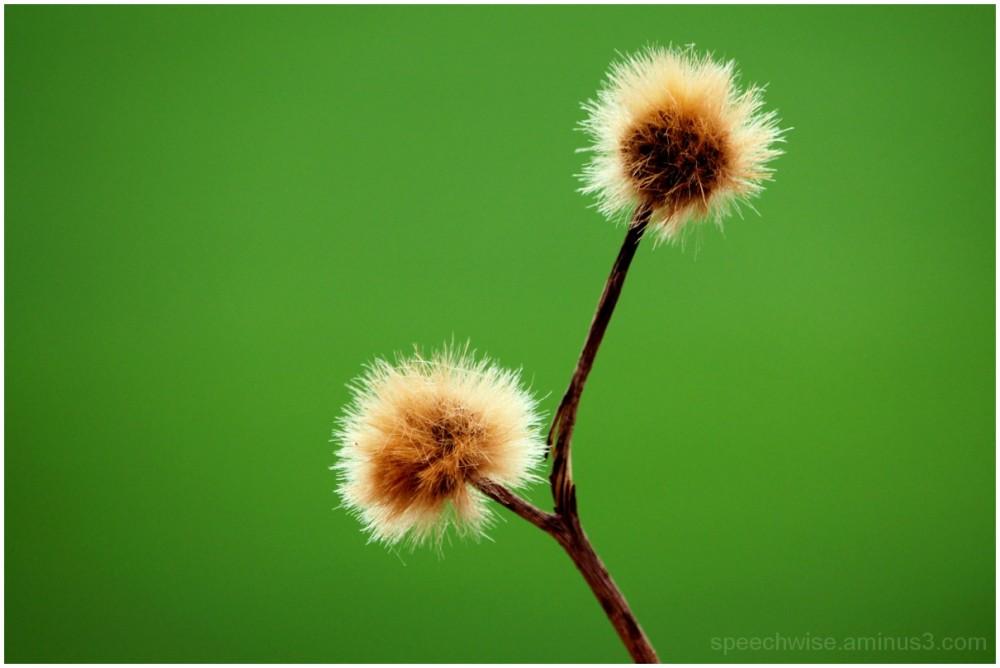 balls of spring
