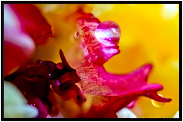 playin with the extension tube #1