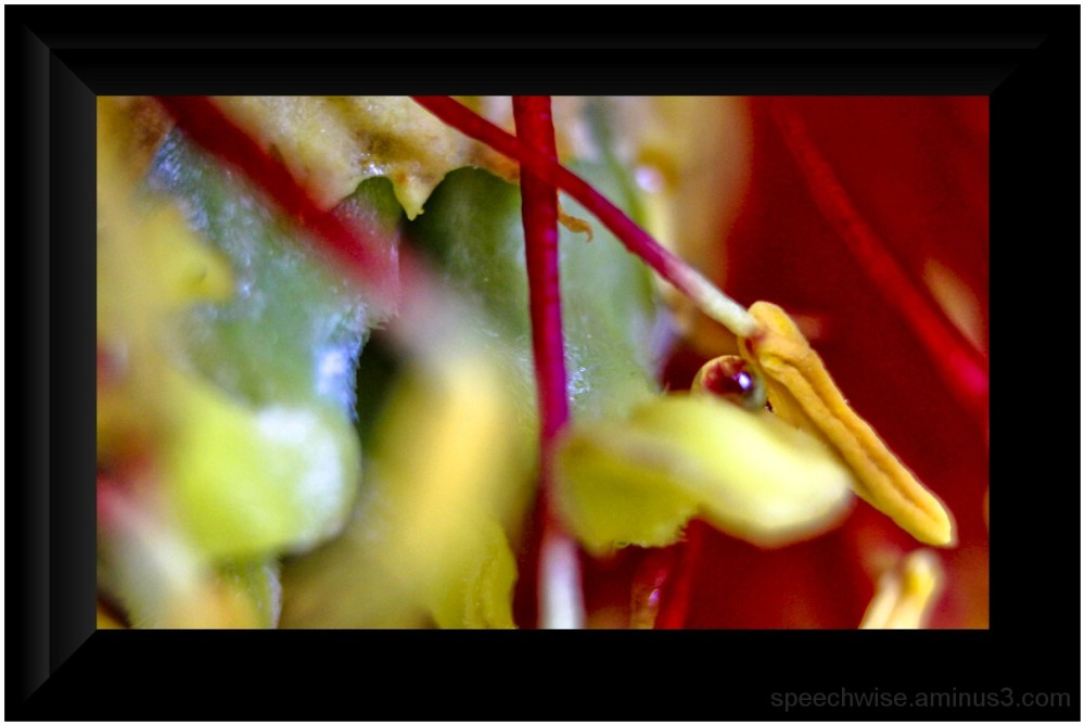 playin with the extension tube #3