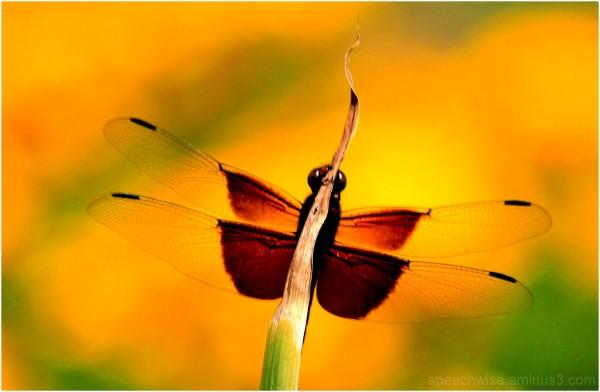 sunny wings
