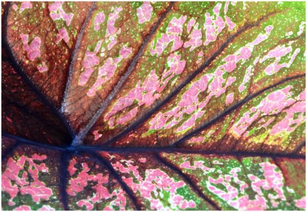 leaf life
