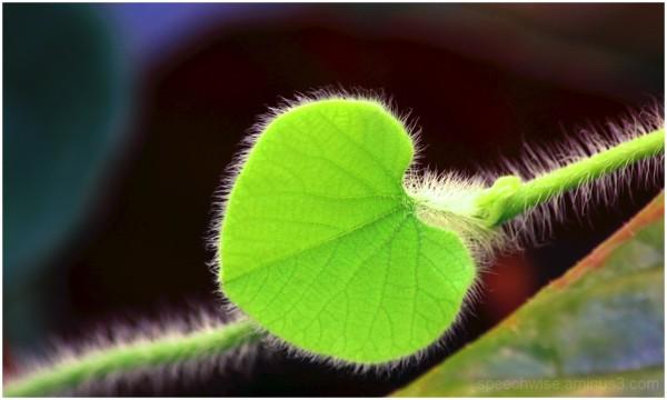 Greenheart!