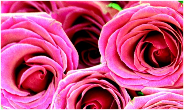 have rosey day!