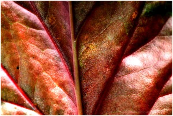leaf lover