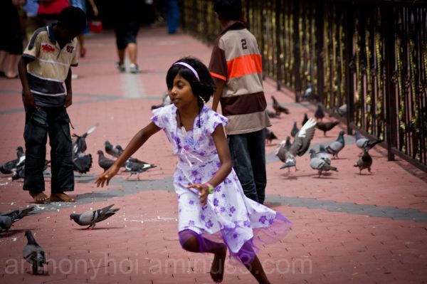 Little girl chasing pigeons