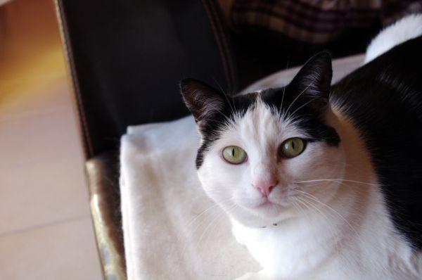 chat félin cat animal