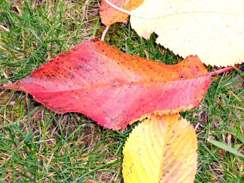 feuilles arbre nature automne rouge jaune leaf