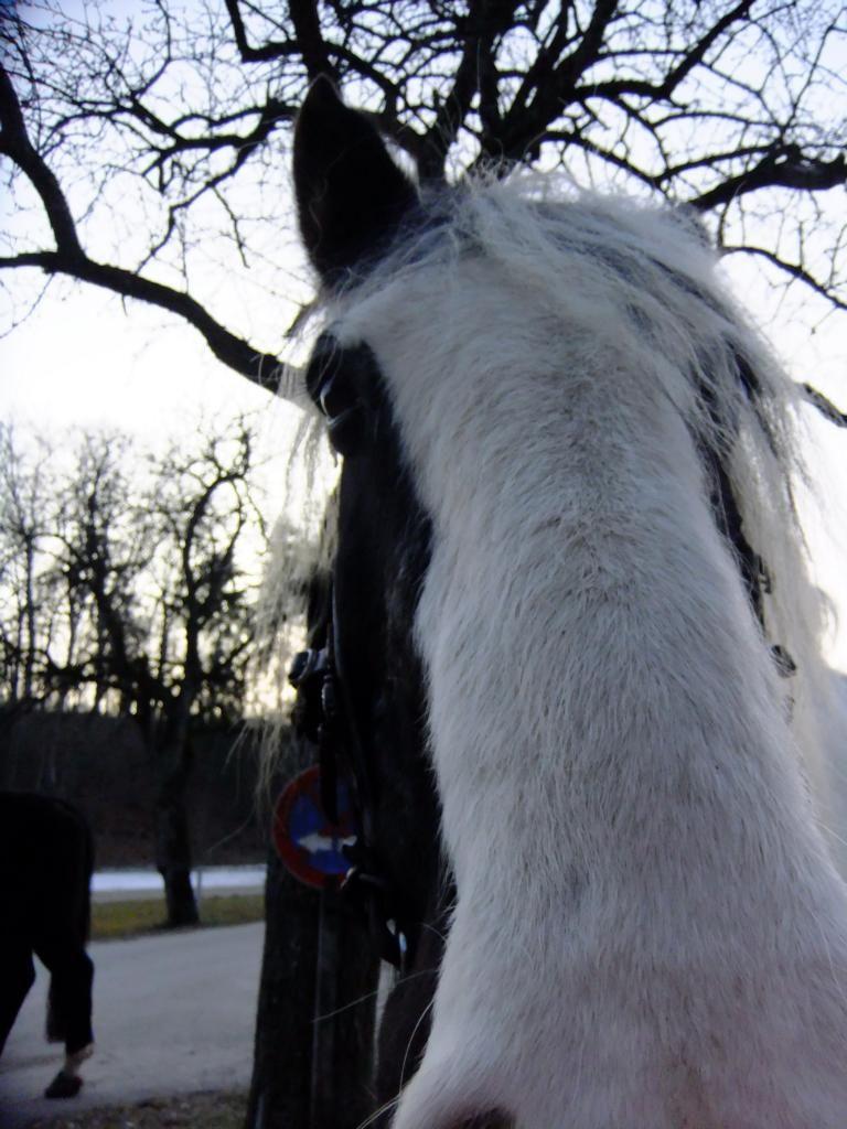 Pferd oder Nasobem?