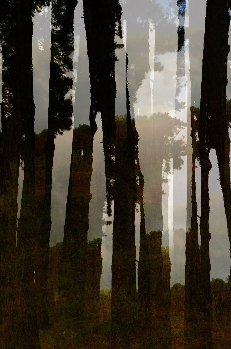Trees abstract view