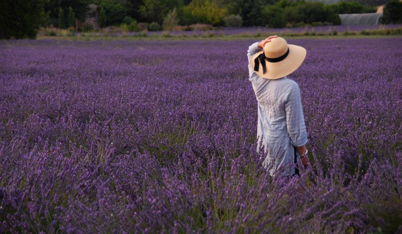 Woman walking in Lavender Field