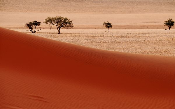 Trees in Namibia Desert