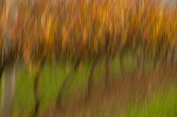 Impressionism in the vineyard