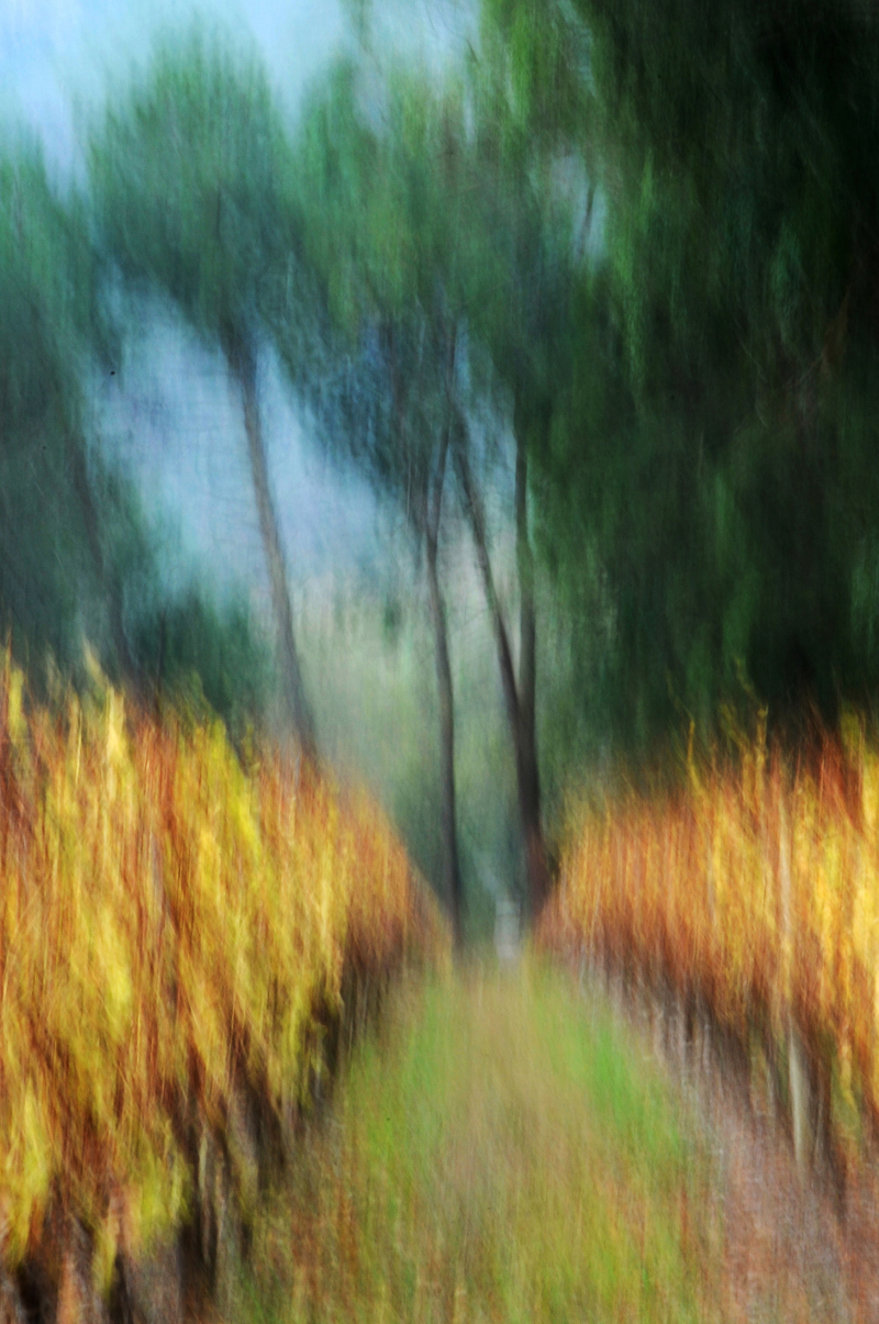 Trees in the vineyard impressionistic.