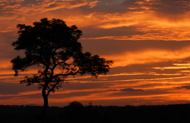Tree in silhouette at sunset