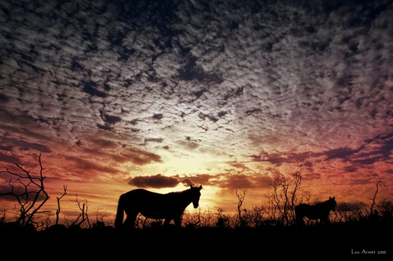 The ponies of the New Forest and Hamphire Skies