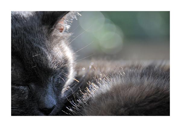 a dreamy cat