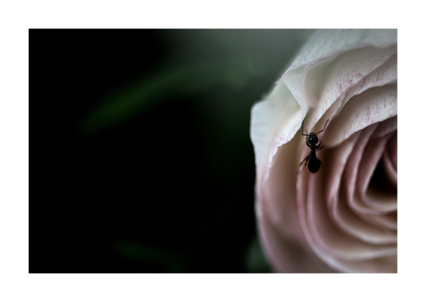 an ant on  a  flower