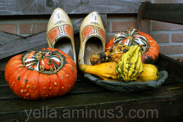 Pumpkins and wooden shoes on a rainy november day