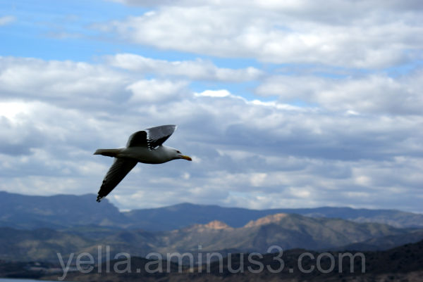 Seagull flying over Spain