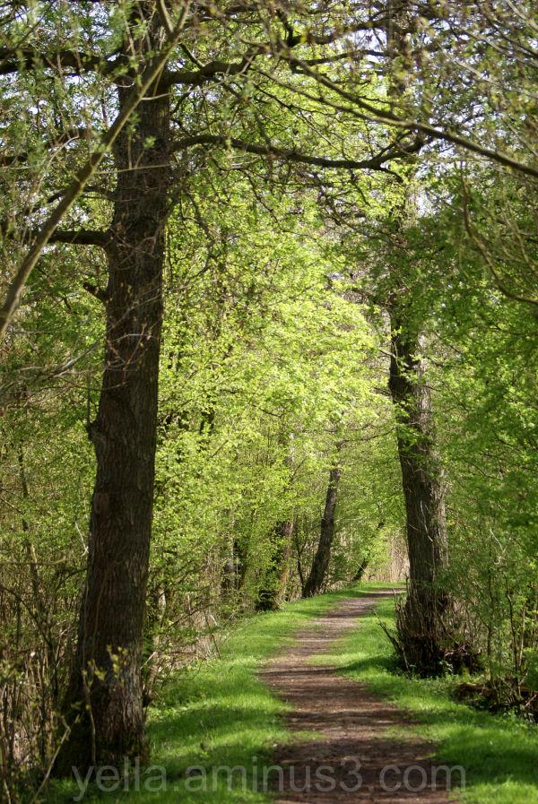 Hiking trail at Oostvaardersplassen, Netherlands