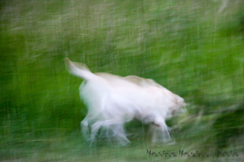 abstract dog picture