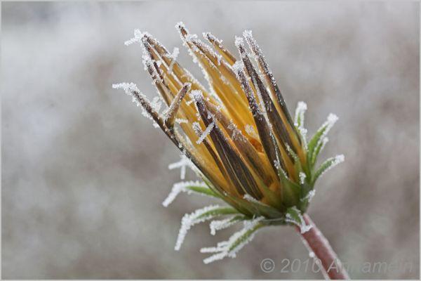 Frozen fingers.