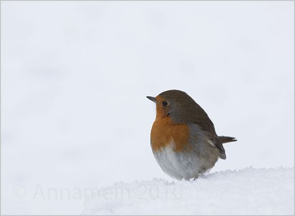 Robin, look what a snow!