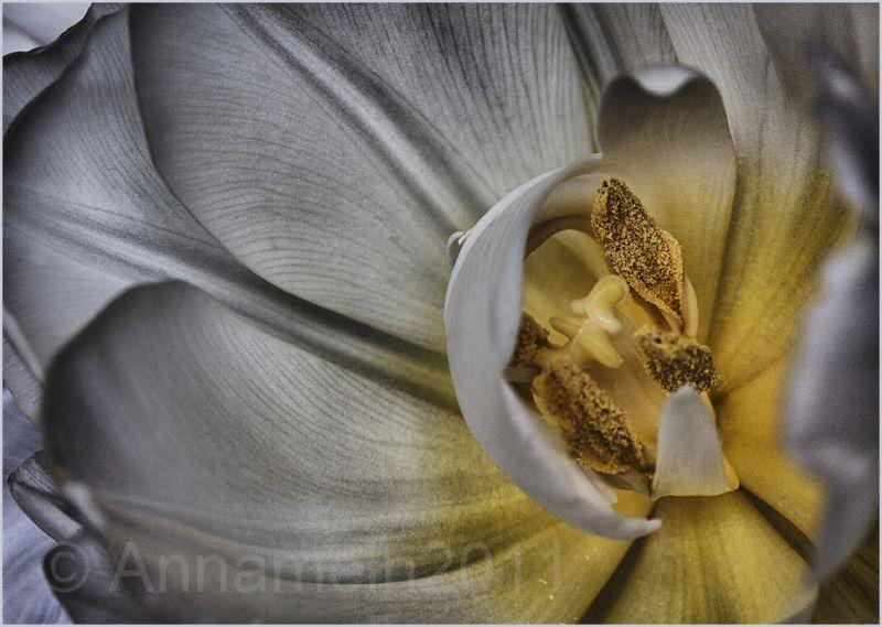 Edited tulip