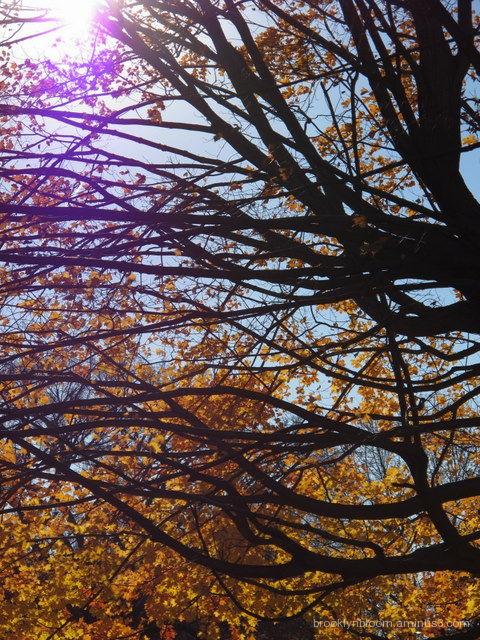 autumn tree in prospect park brooklyn