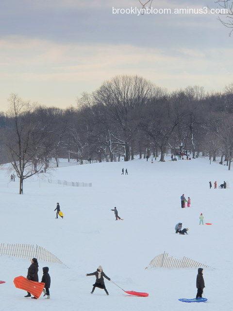 sledding in prospect park brooklyn