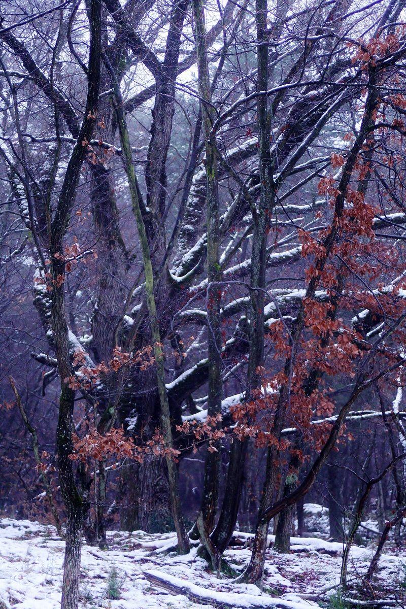 Némorosa, l'esprit de la forêt   II