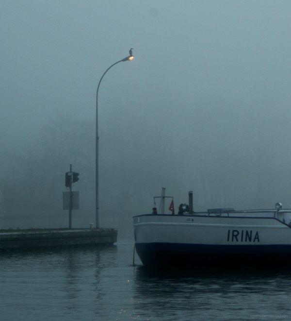 Irina et le cormoran